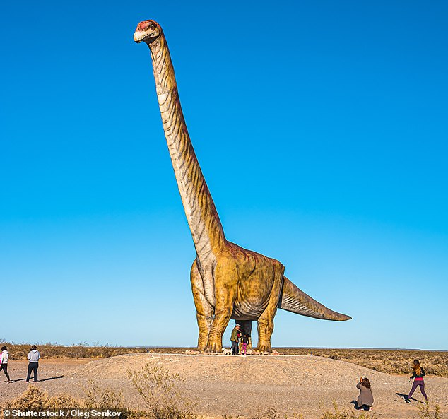 `` It is clear that a titanosaur that has been partially recovered from the formation of Candelarus can be considered one of the largest of the titans, '' the researchers wrote.  Possibly of a body mass similar to Patagotitan [pictured, in a full sized model] Argentinosaurus or greater